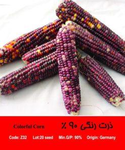 بذر ذرت رنگی 90 درصد Colorful Corn