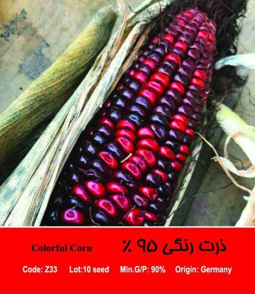 بذر ذرت رنگی 95 درصد