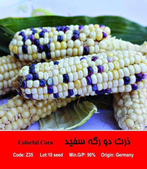 بذر ذرت سفید دورگه Colorful Corn