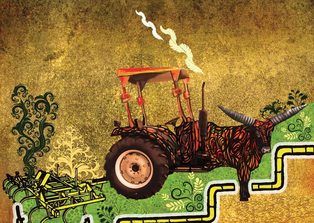 خدمات کشاورزی به سراسر ایران به صورت مشاوره و محصولات