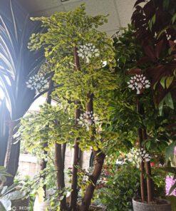درختچه مصنوعی درجه یک AFN124 با بهترین کیفیت و نازل ترین قیمت ها