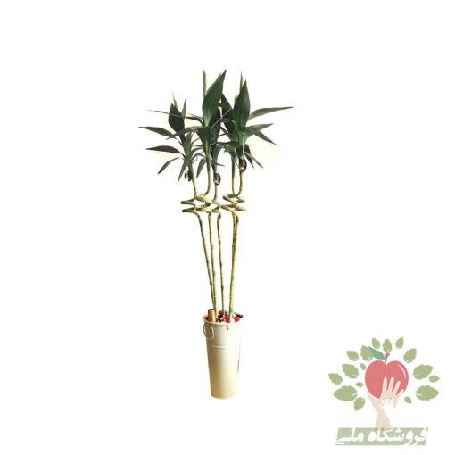 بامبو مصنوعی لاکی 5 شاخه با کیفیت عالی ارسال به سراسر ایران 5 شاخه بامبو