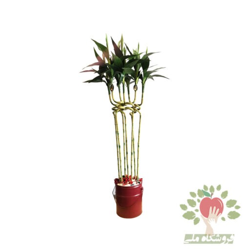 بامبو مصنوعی 7 شاخه مونتاژ و دیزاین شده در گلدان فلزی با قیمت مناسب