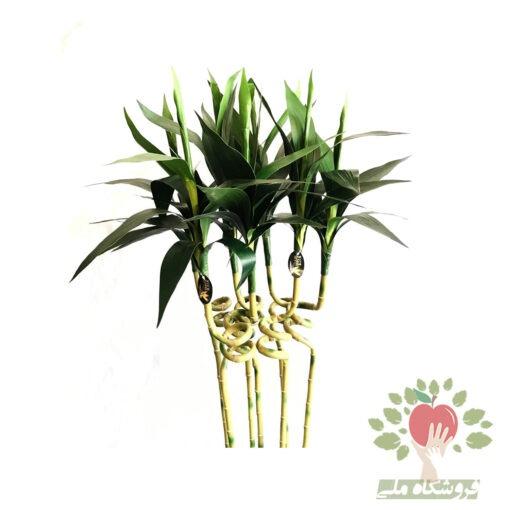 بامبو مصنوعی 7 شاخه ای مونتاژ در گلدان فلزی