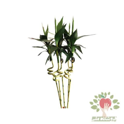 نمای نزدیک 5 شاخه بامبو مصنوعی با کیفیت عالی