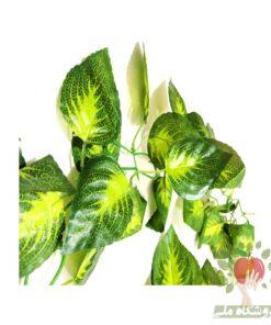 گیاه رونده مصنوعی فیتونیا