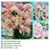 خرید درخت شکوفه مصنوعی