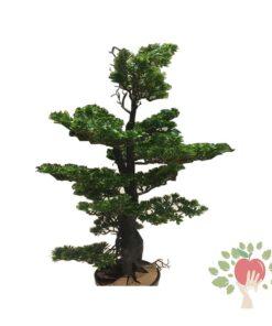 درختچه مصنوعی کاج بنسای