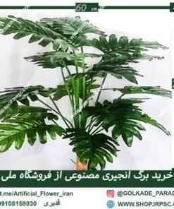 گل منوعی انجیری ra017